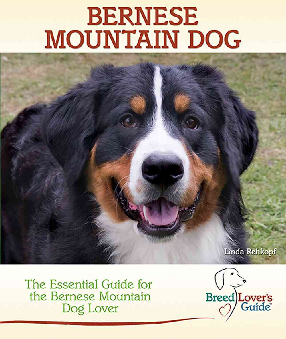 Bernese Mountain Dog By Rehkopf, Linda